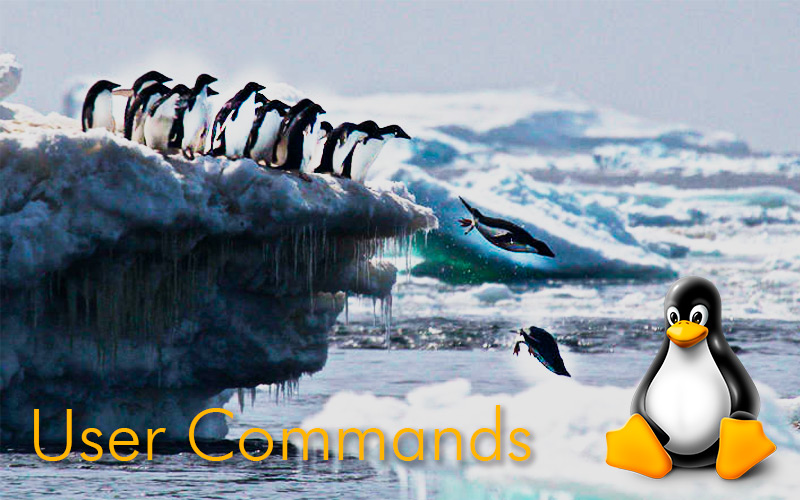 What are Linux user commands and what are they for?